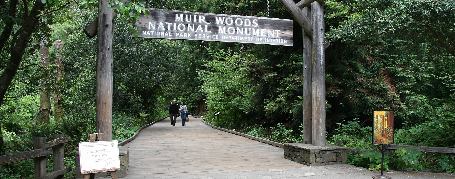 hike muir woods national monument